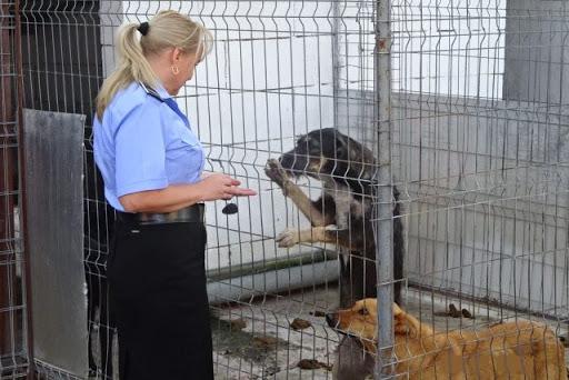 Ministrul Marcel Vela anunță că s-a înfiinţat Poliţia Animalelor