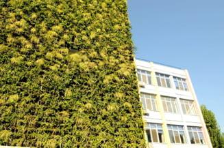"""Primăria Sectorului 4 lansează un concurs internaţional de soluţii pentru realizarea de """"pereţi verzi"""" din fonduri europene"""