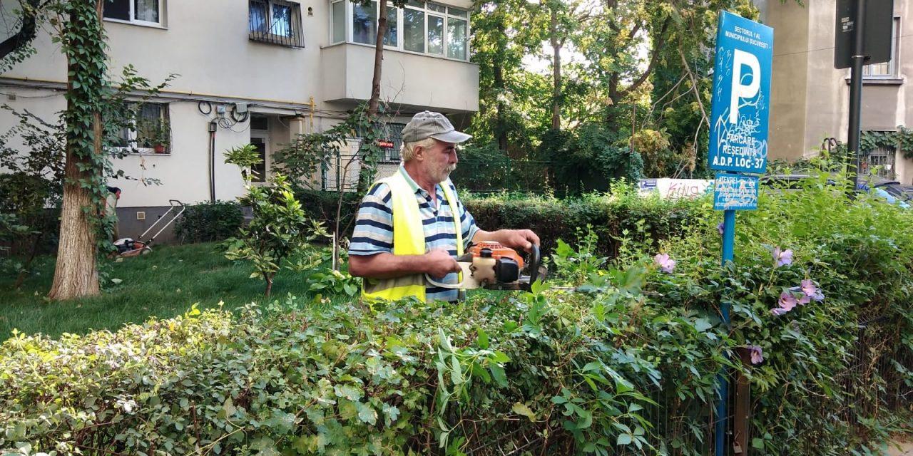 Sector 1: Proiect prin care persoanele juridice pot adopta spaţii verzi