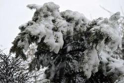 Ninsori prognozate până pe 18 ianuarie, dar și după 25 ianuarie